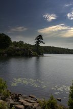 Pine Meadow Lake with Tree Vertical